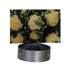 Blomkål Såhjul För HMC Såmaskin